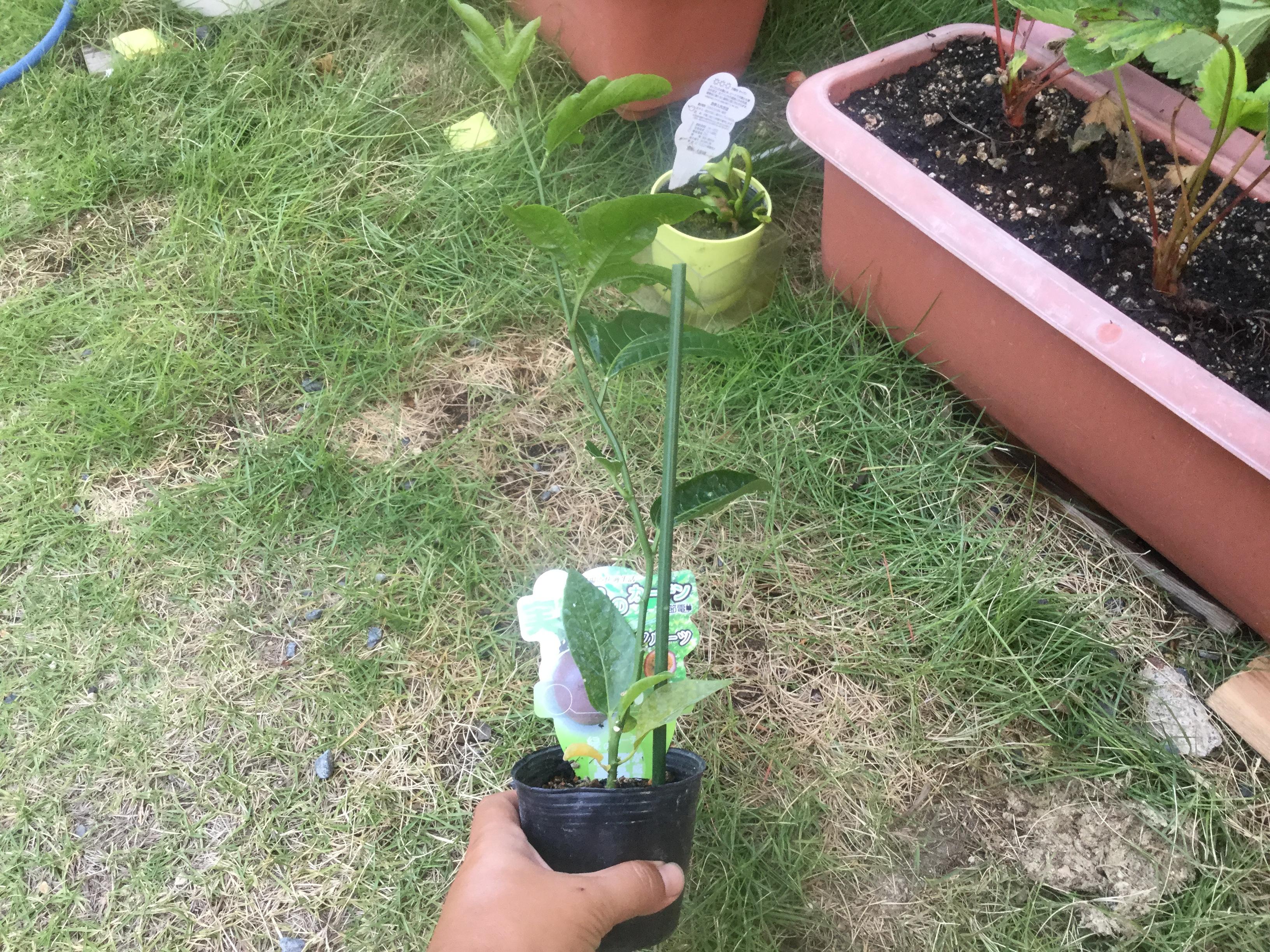 新しい植物に挑戦!これはよさそう!