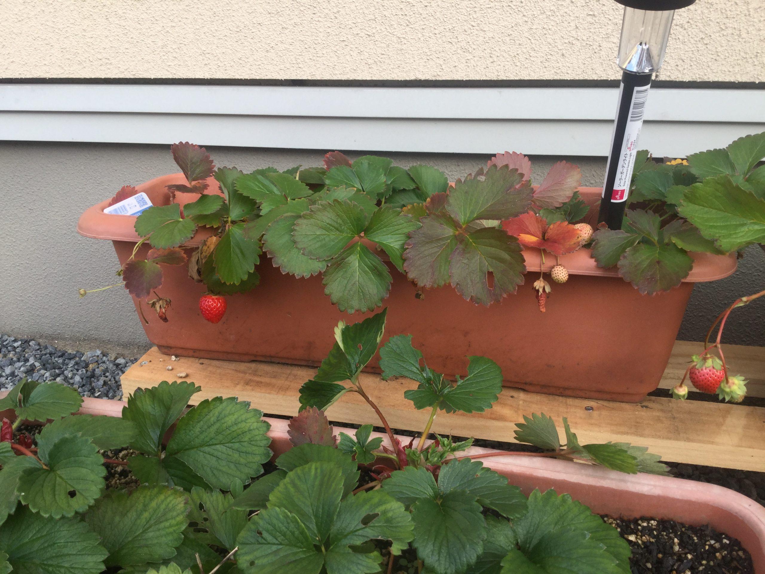 庭にウッドデッキを格安で本気で作る!