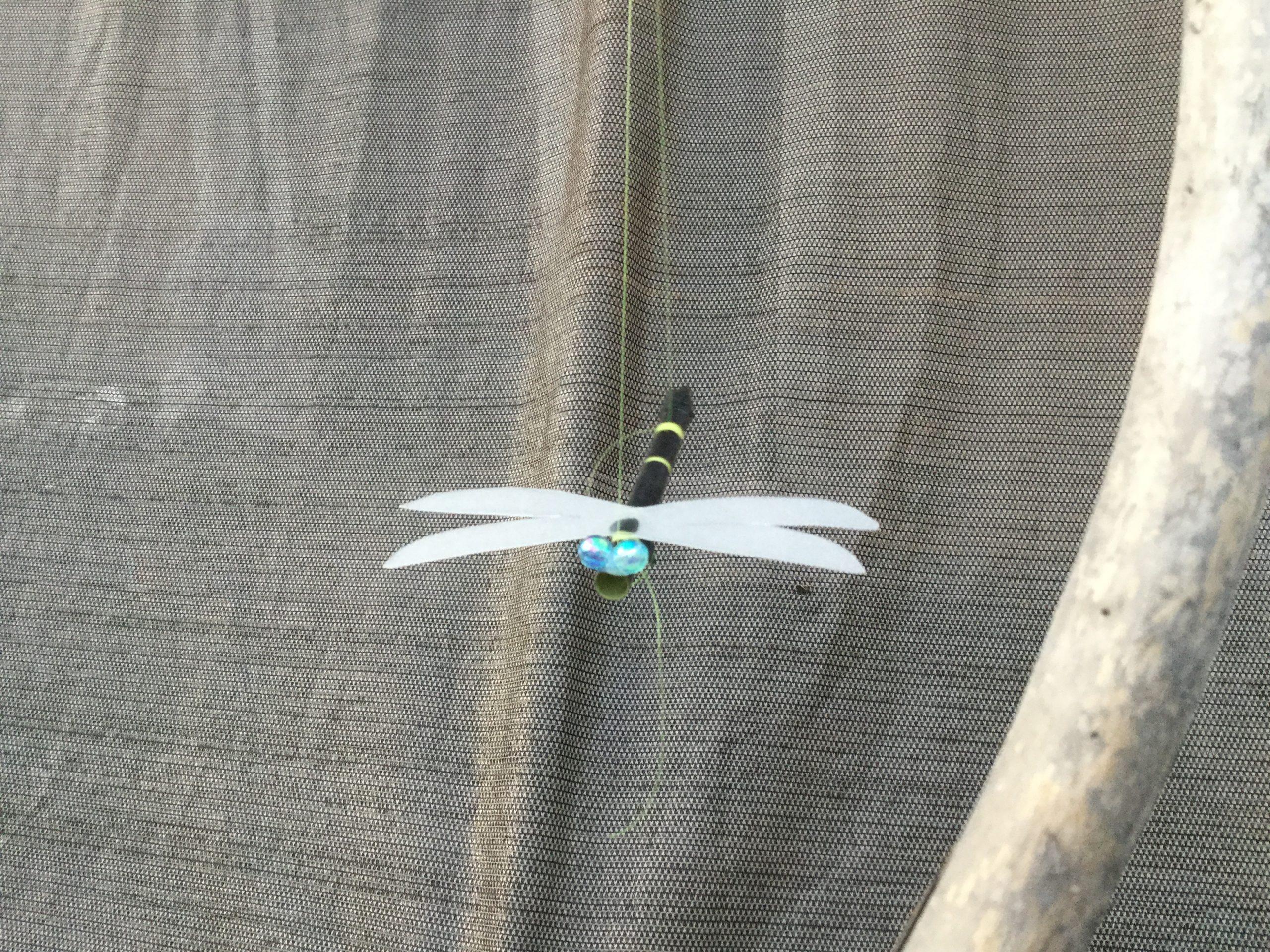 外を飛ぶオニヤンマ