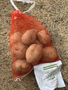 ジャガイモの種芋