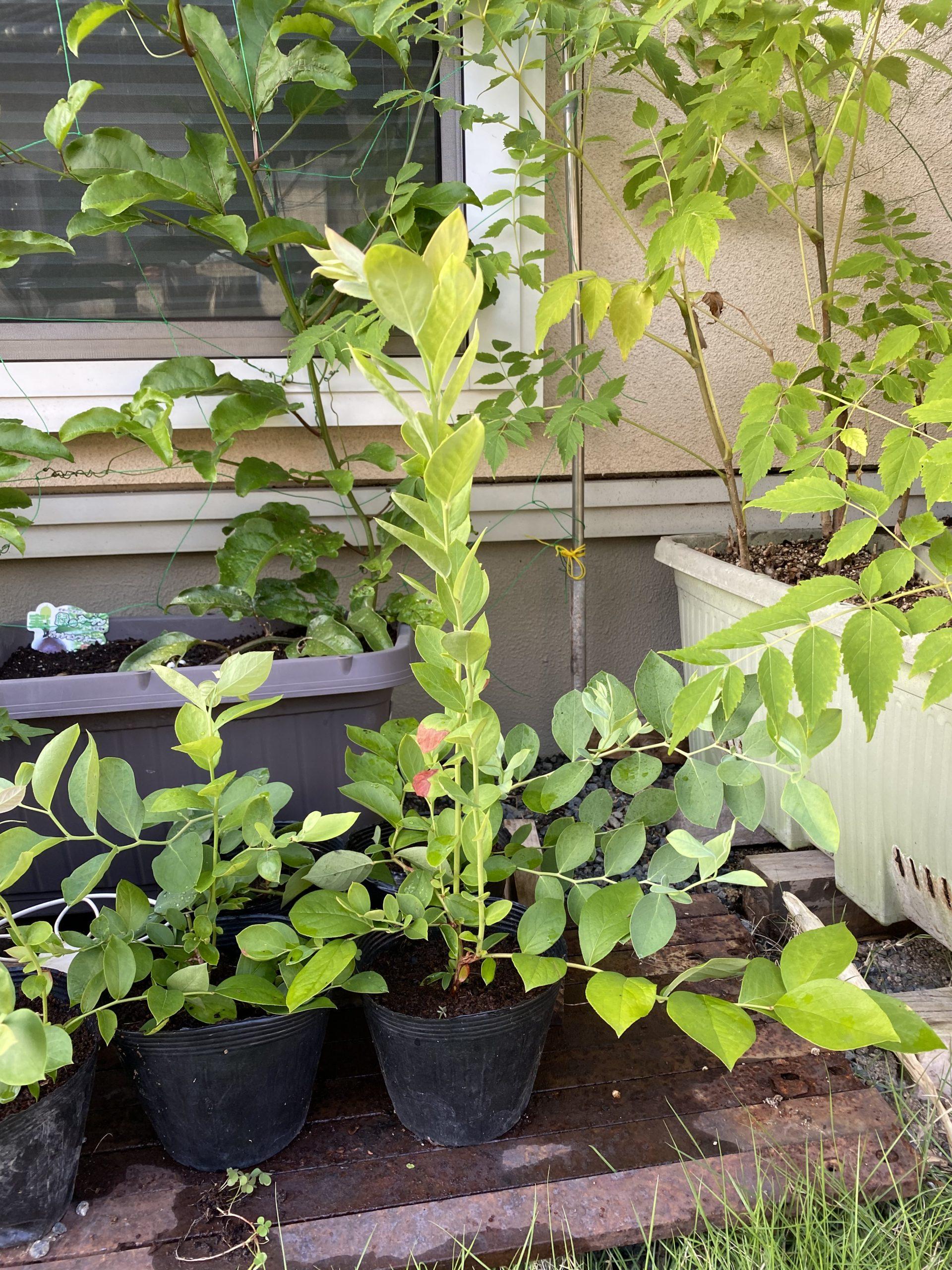 迷う間も成長を続ける!植物はつくづく偉いと思う!