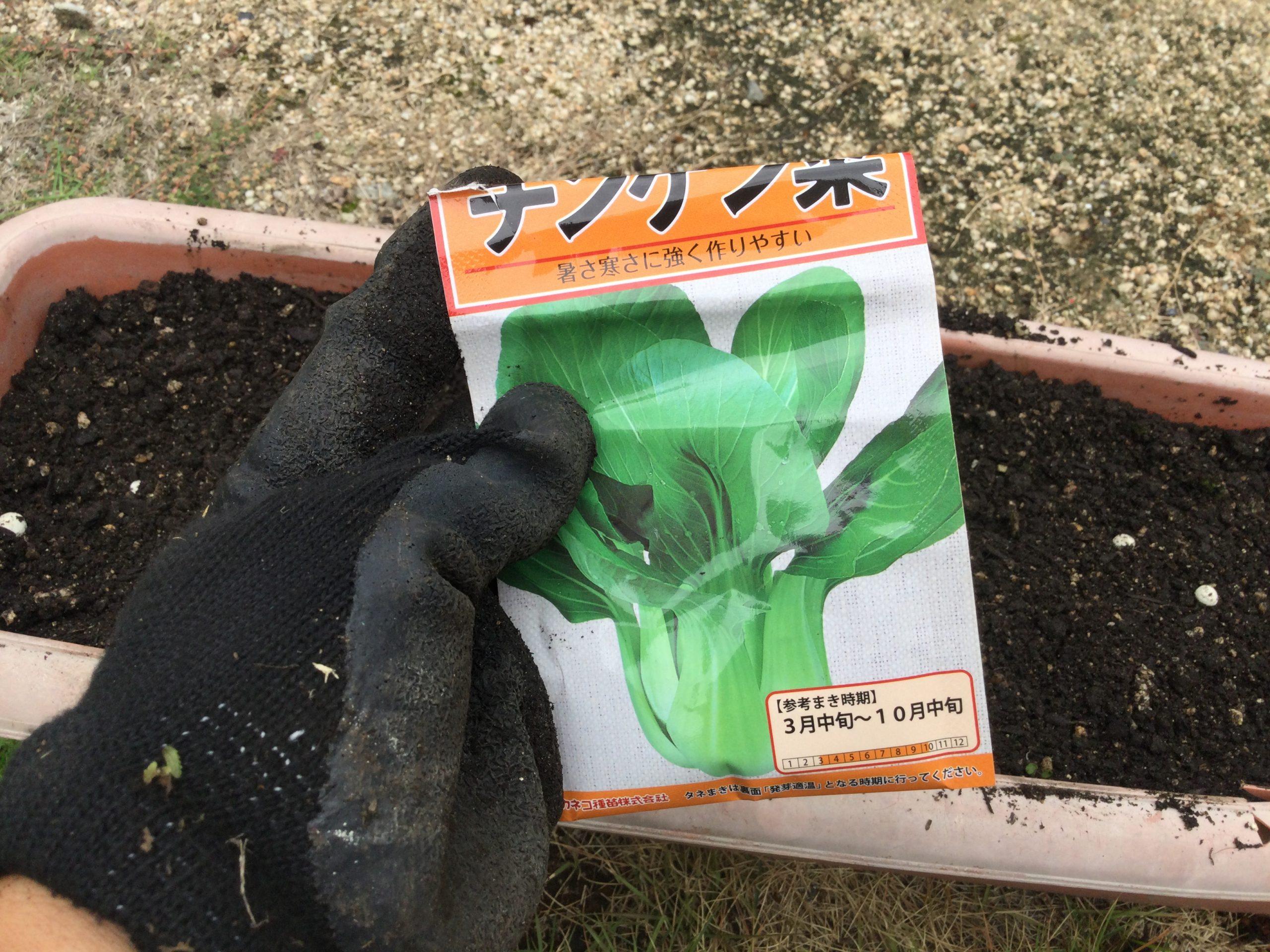 Daisoで半年前に購入した種が使えるか?ほうれん草とチンゲン菜!