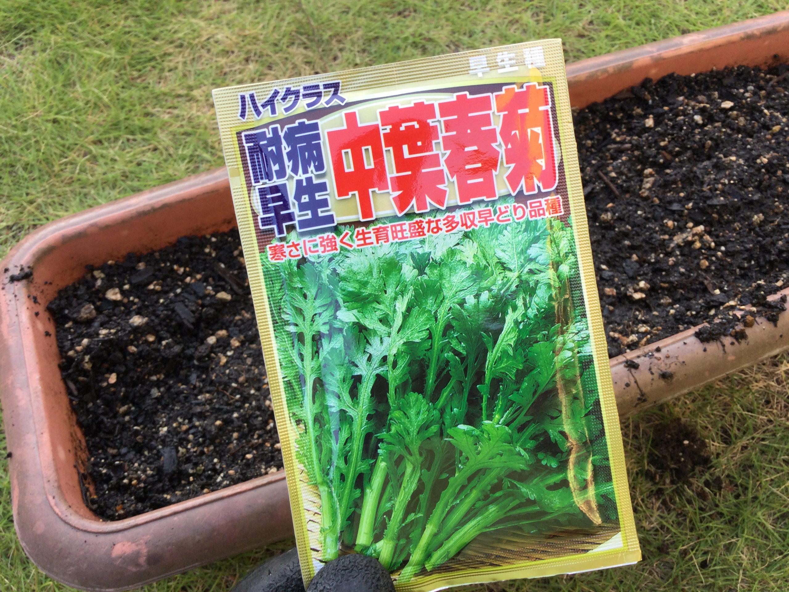 葉物野菜の高騰に対処!冬に欠かせない春菊たちを植えつける!